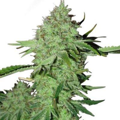 Crystal strain