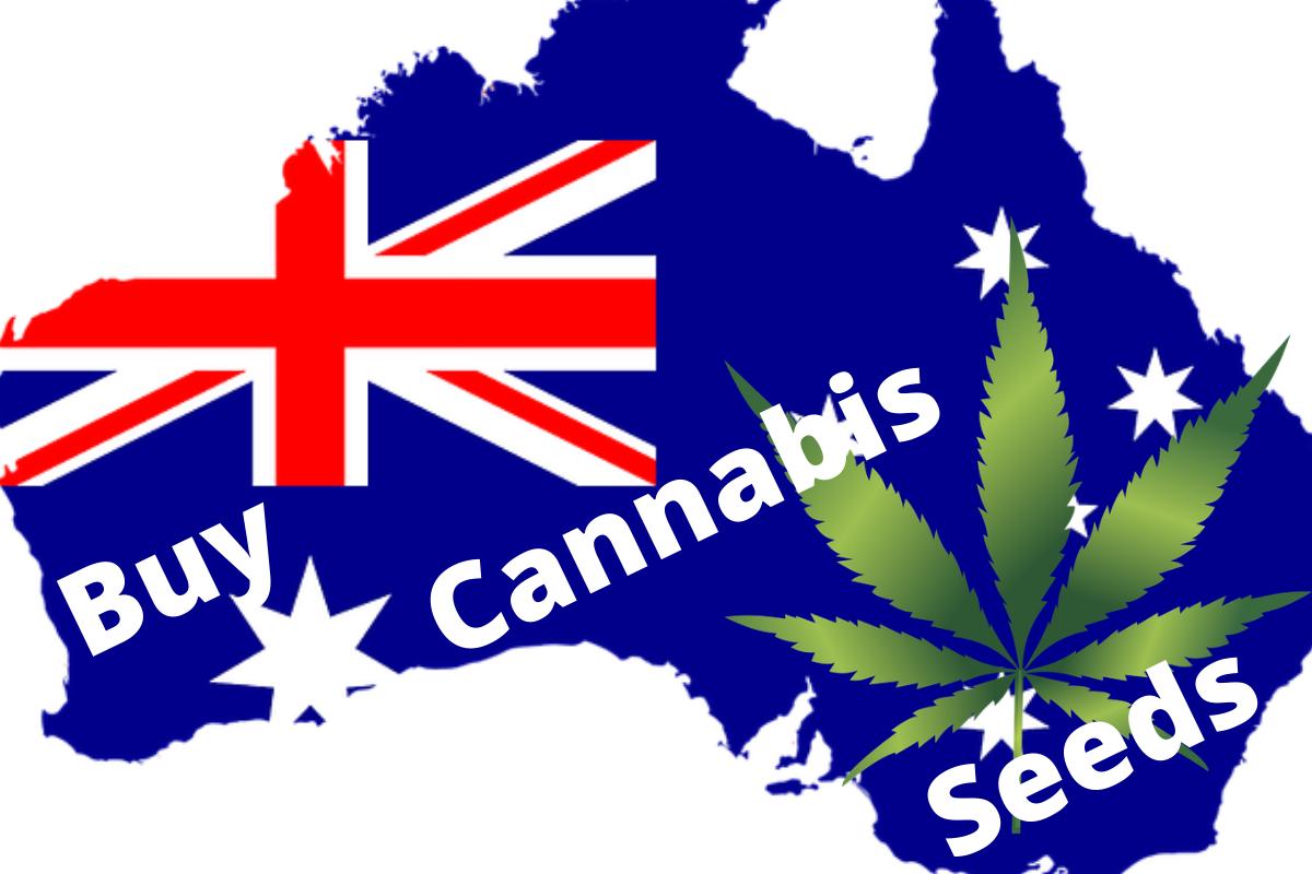 Buy-Cannabis-Seeds