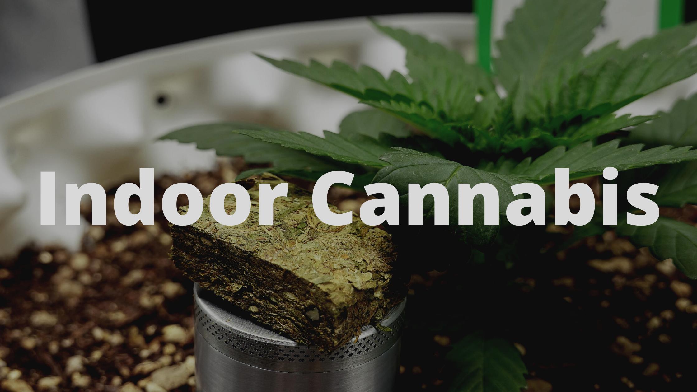 Indoor Cannabis Strains