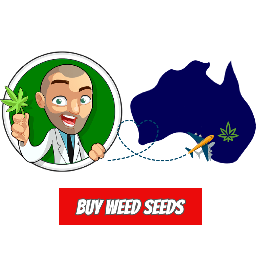 Buy Marijuana Seeds