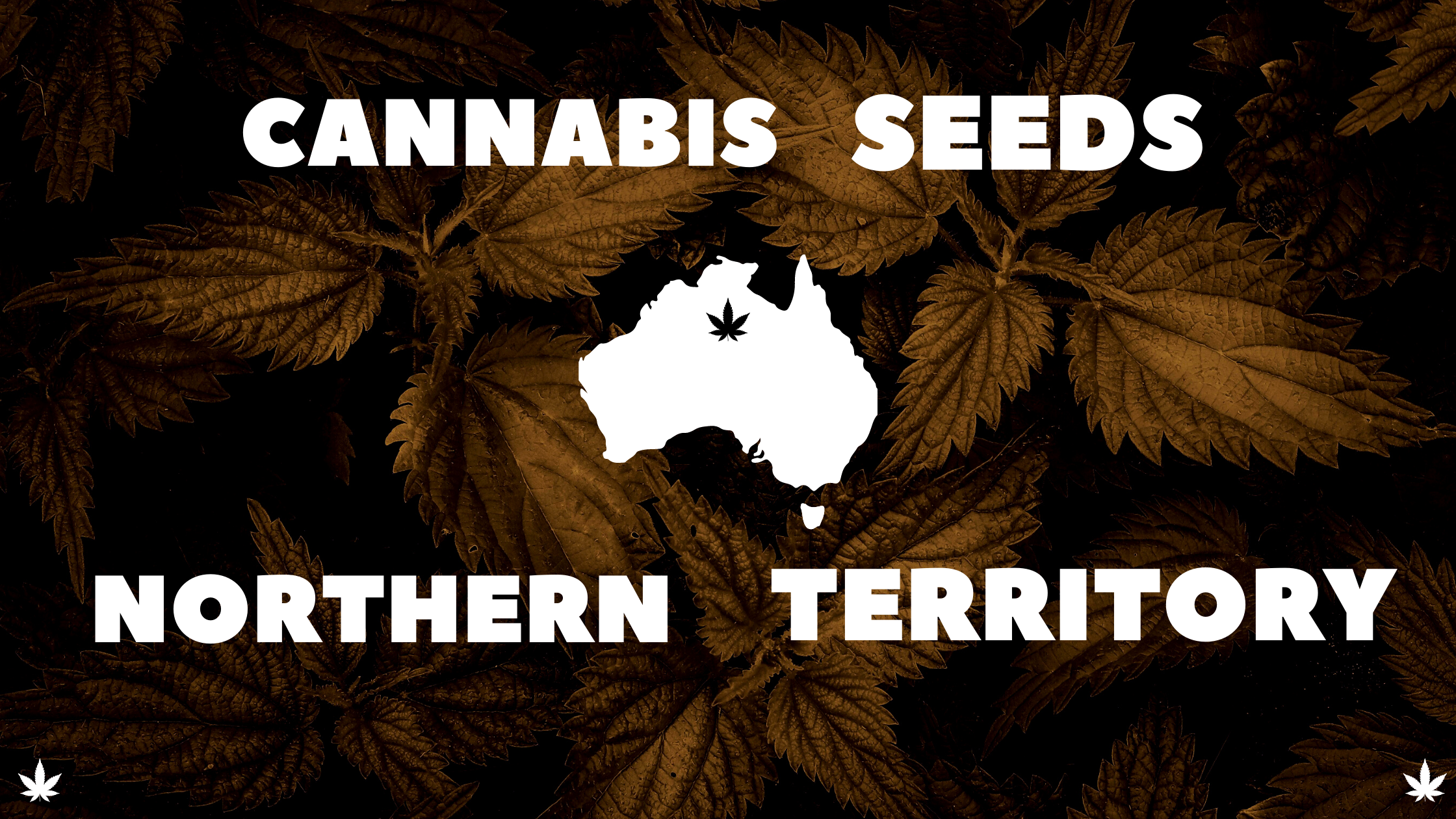 Cannabis-seeds-northern-territory-banner