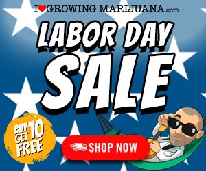 labor day seed sale