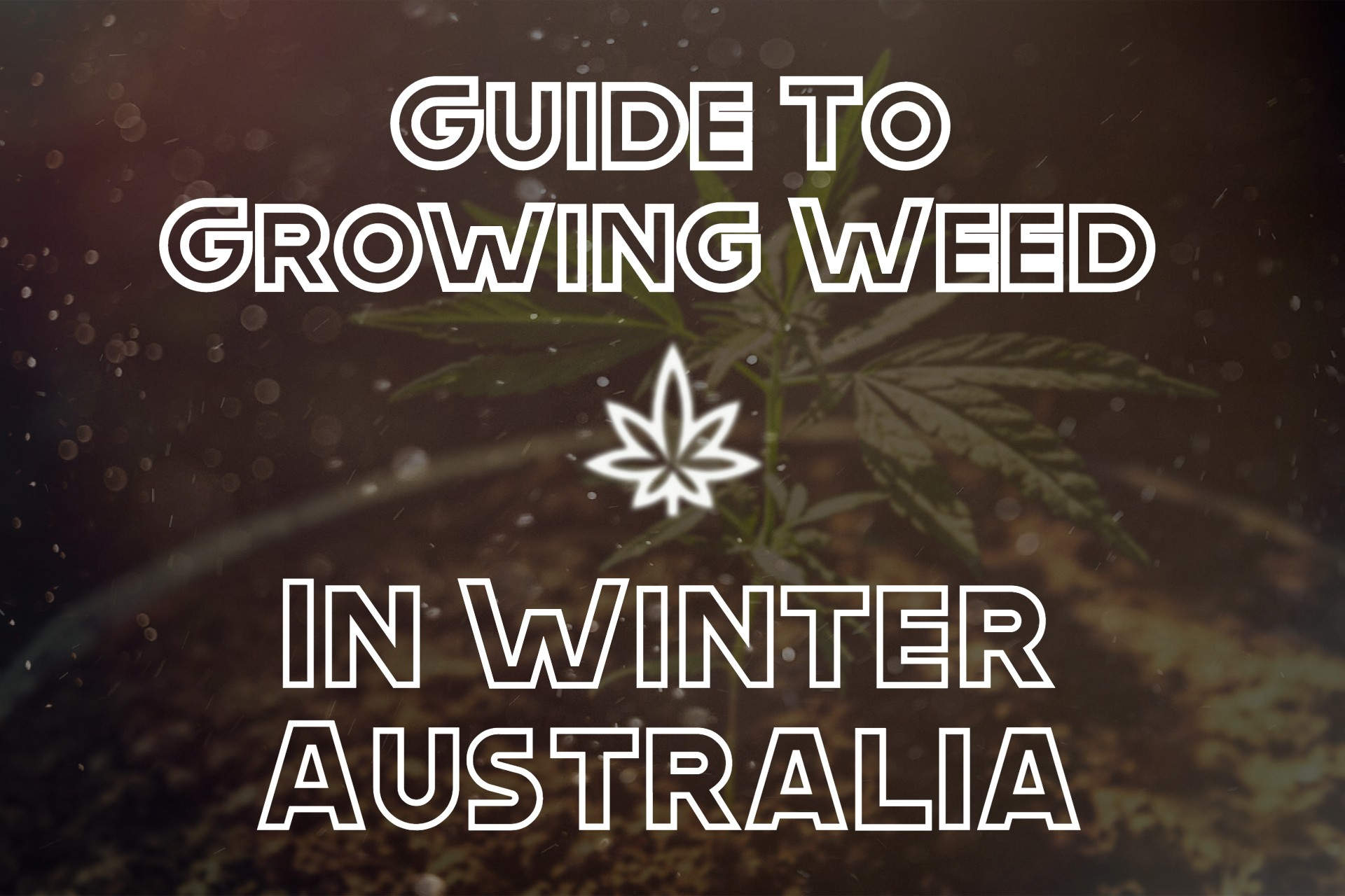 Guide To Growing Weed In Winter Australia