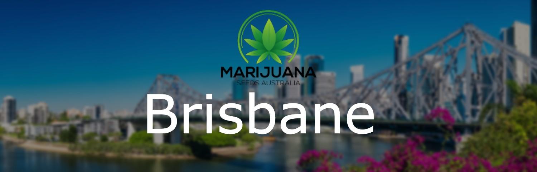 brisbane cannabis seeds